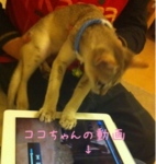 iphone/image-20111009140612.png